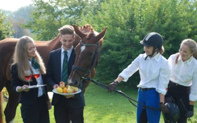 Ausbildung Pferdewirtschaft
